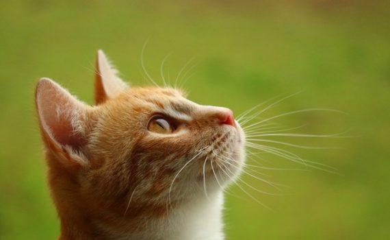 Comprobado: Los gatos entienden las leyes de Newton